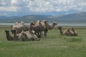 Circuit-Decouverte-de-la-Mongolie-centrale-et-des-richesses-du-Gobi-Orso-Voyage