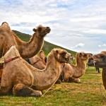 Extension « Dunes et Canyons du Gobi du sud » – 7 Jours