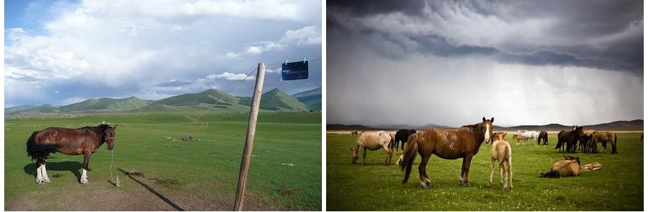 Je demandais des nouvelles à un berger qui s'occupait des veaux / Il me répondit qu'elle était allée chercher des bouses de vache
