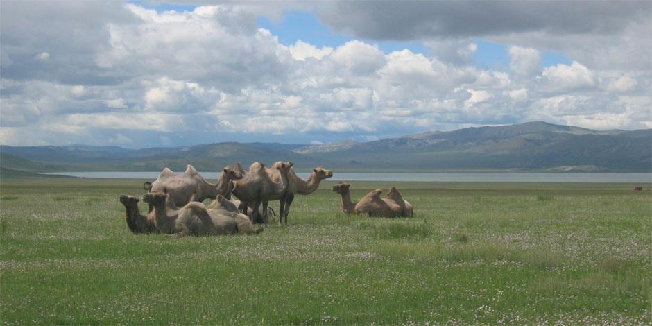 Découverte de la Mongolie centrale et des richesses du Gobi – 16 Jours