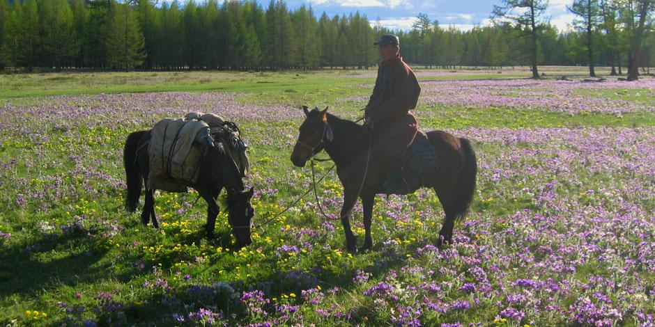 Khenti, pays sauvage, faune et flore de la Mongolie – 16 Jours