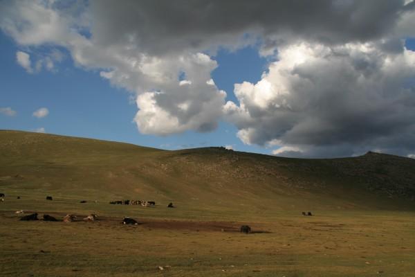 Planete Insuline en Mongolie 10