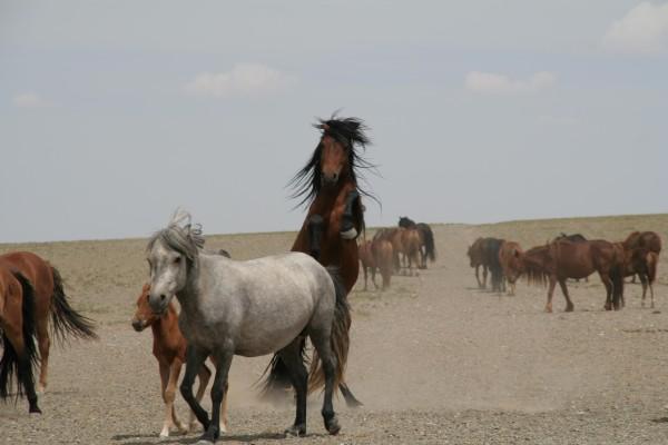 Planete Insuline en Mongolie 3