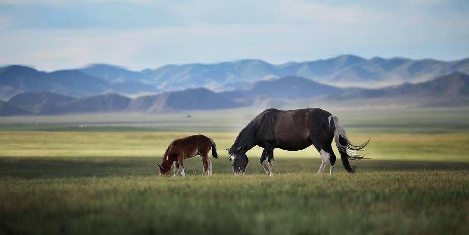 mongolie-voyage-voyage-culturel-avec-conferencier